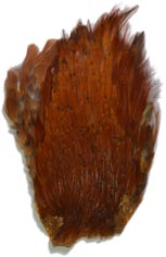 Indian Cock Neck from W. W. Doak